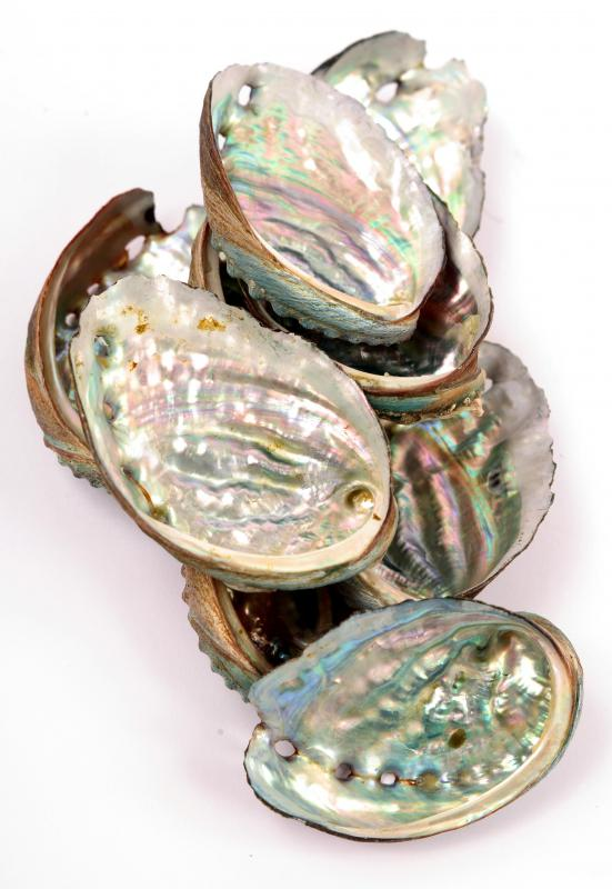 Abalone shells with mother of pearl, which is often used to make caviar spoons.