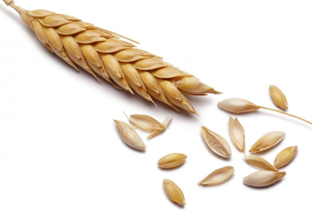 Barley, which can be fermented to make black vinegar.