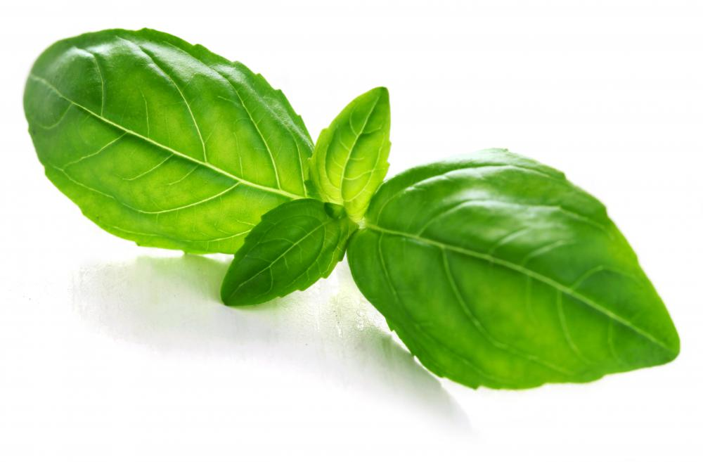 Basil is a common ingredient in many tomato sauces.