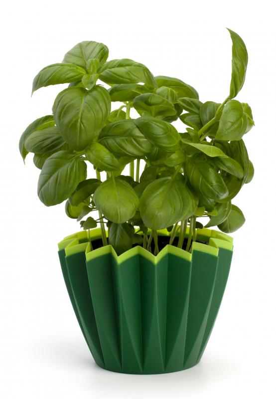 Herbs like basil are a common addition to Mexican white sauce.