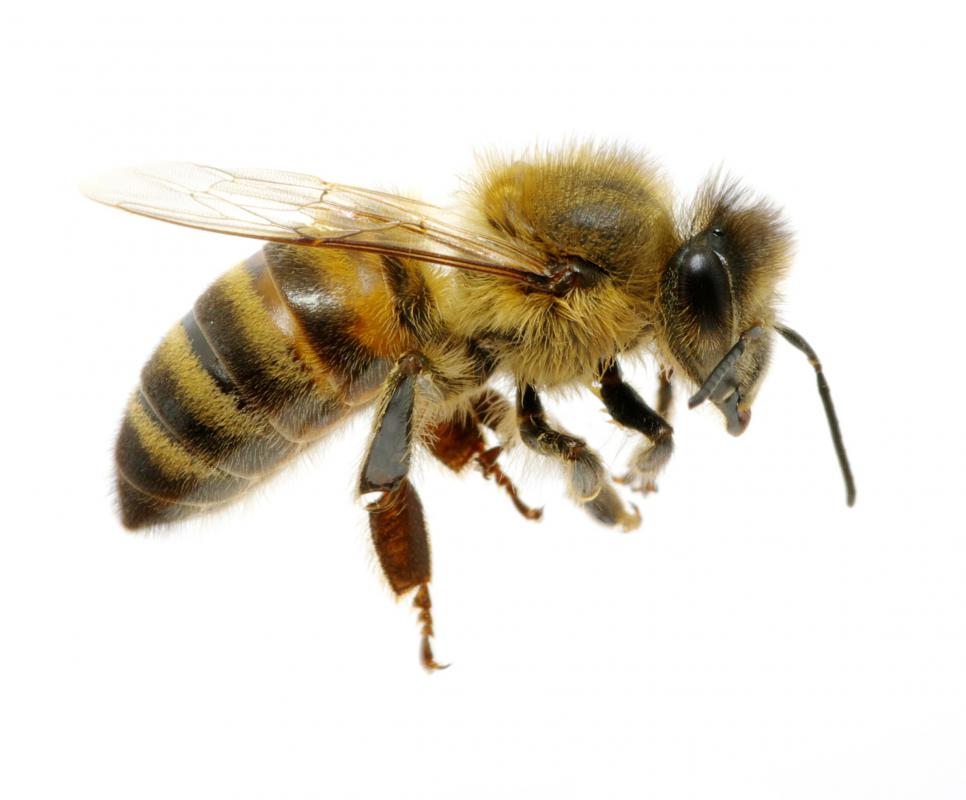 Bees can collect pollen and nectar from any type of flower, including sunflowers.
