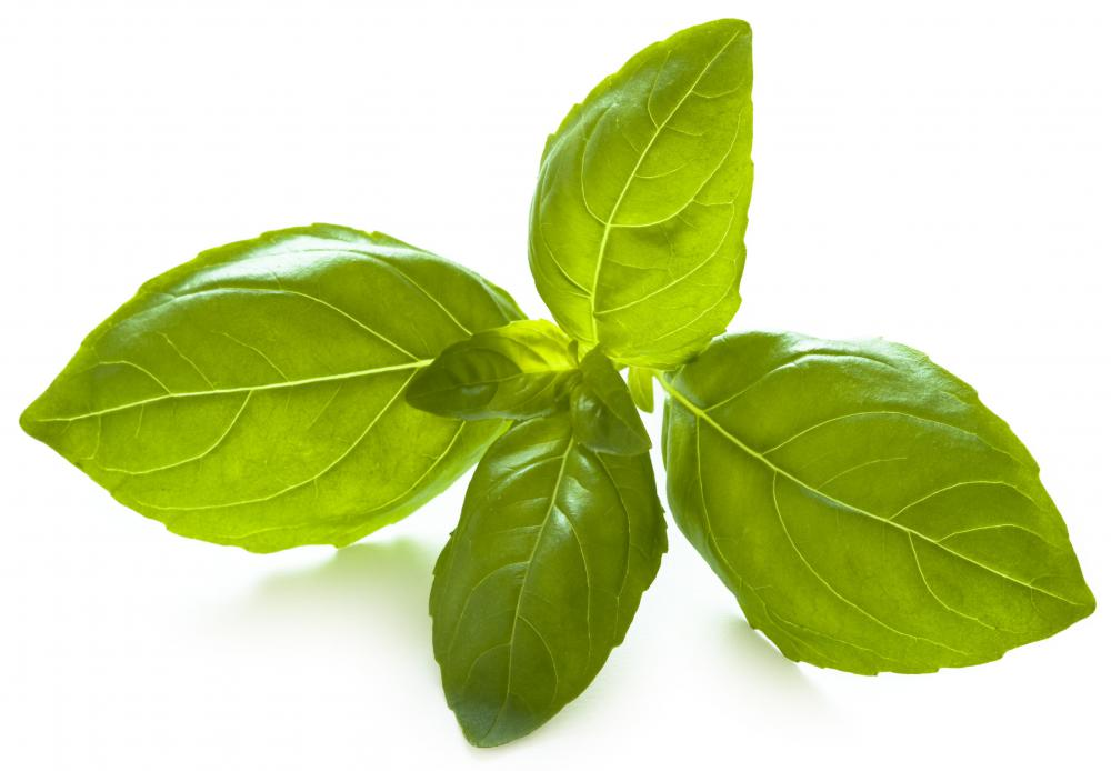 Basil, which is used to make Margherita pizzas.