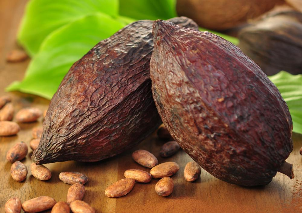 Cocoa solids and butter come from cacao beans.