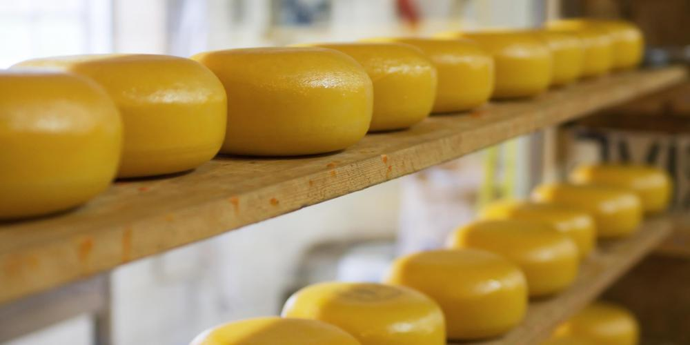 Cheddar cheese wheels aging on shelves.