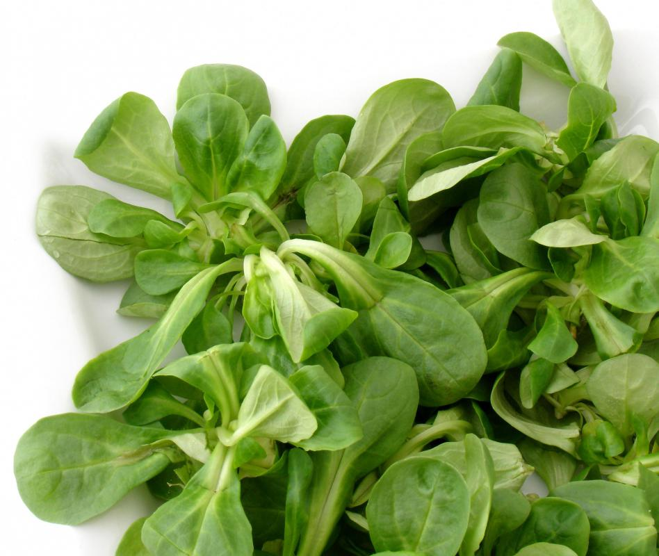 "Mâche lettuce may also be referred to as ""lamb's lettuce"" because it tastes best during the spring lamb season."