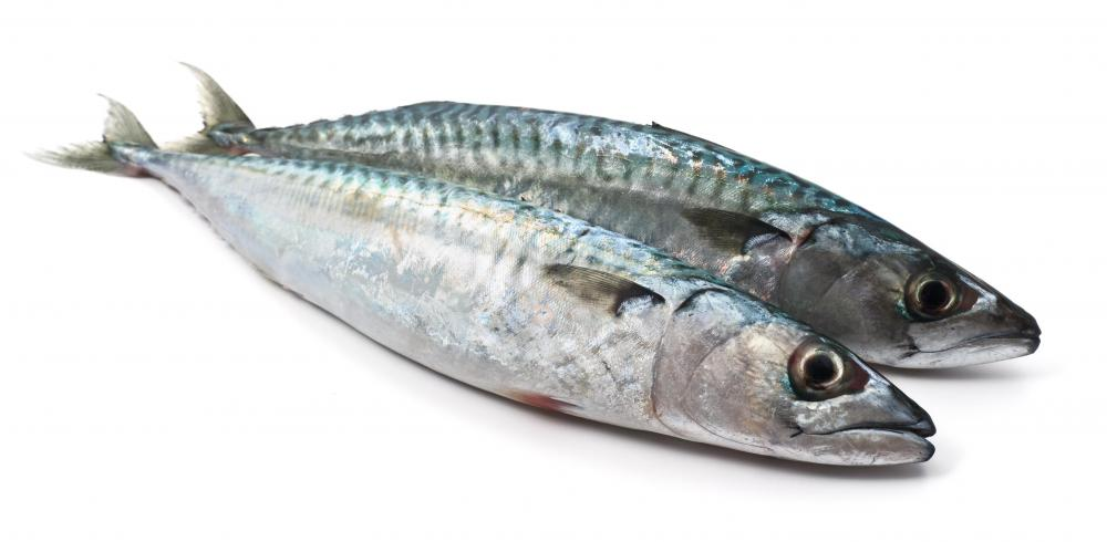 Mackerel is commonly used to make sashimi.
