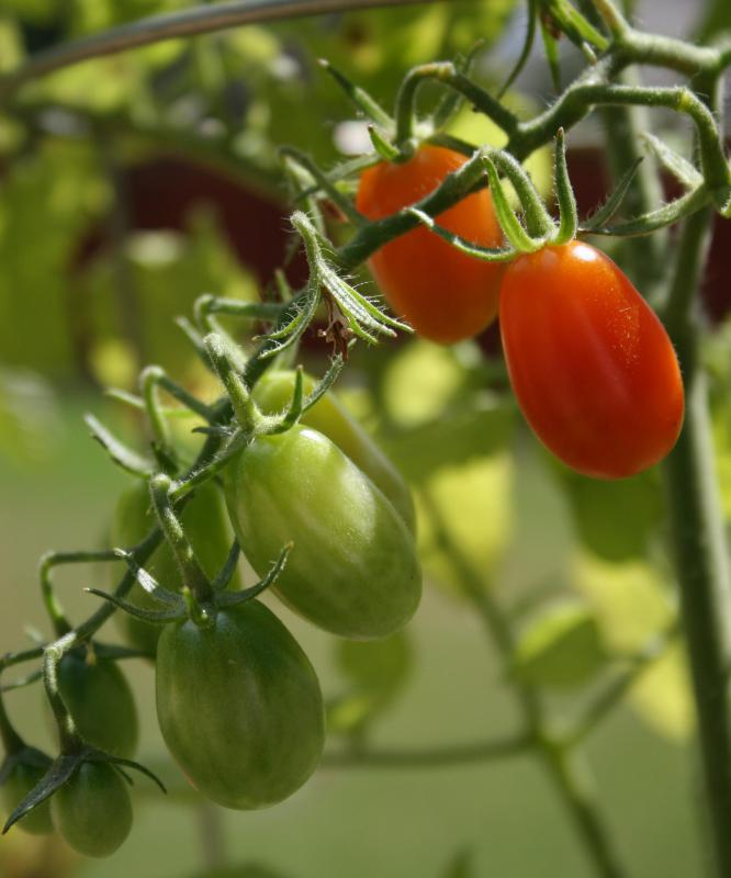 A section of a grape tomato can be a nice addition to a canape.