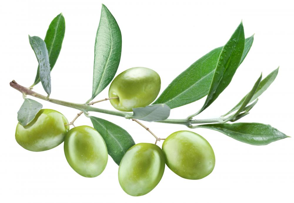 Green olives are often stuffed with pimento.