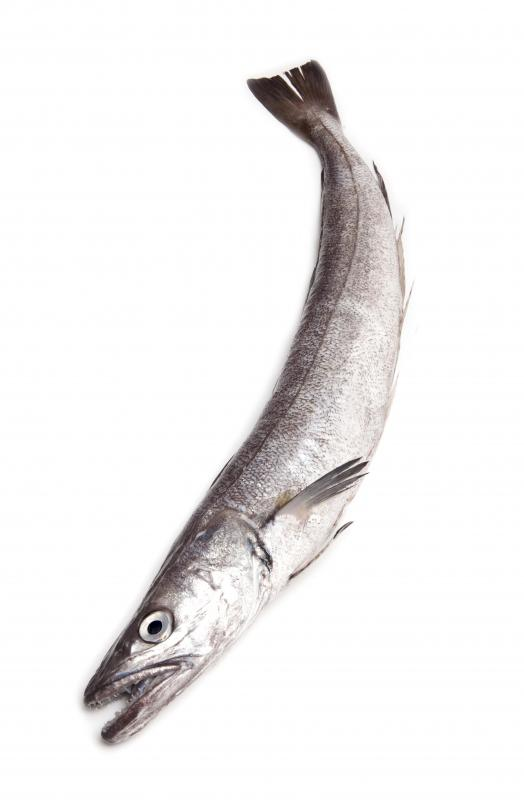Hake is a type of deep-sea cod fish.
