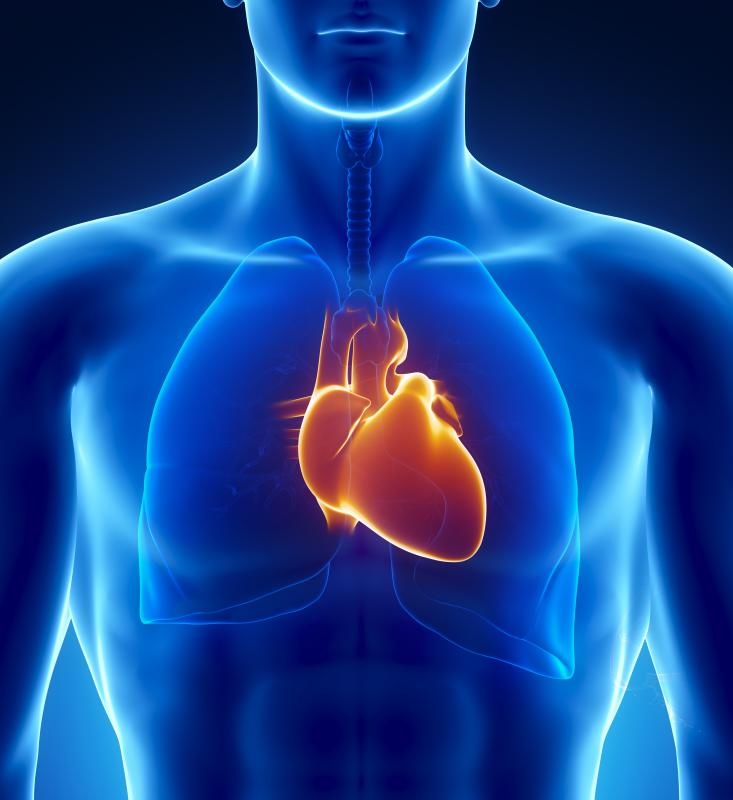 Theobromine is a stimulant that can cause the heart to beat more rapidly.
