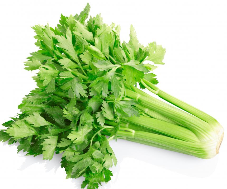 Celery stalks grow in bundles that are about 12 to 16 inches long.