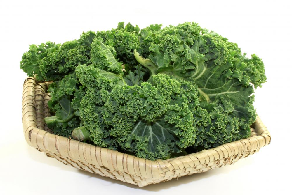 Kale can be differentiated from regular cabbage by its ruffly appearance and loosely furled leaves.
