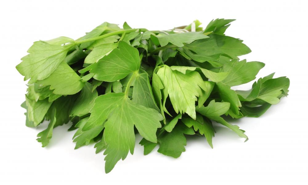 Lovage, like parsley, is part of the Apiaceae family.