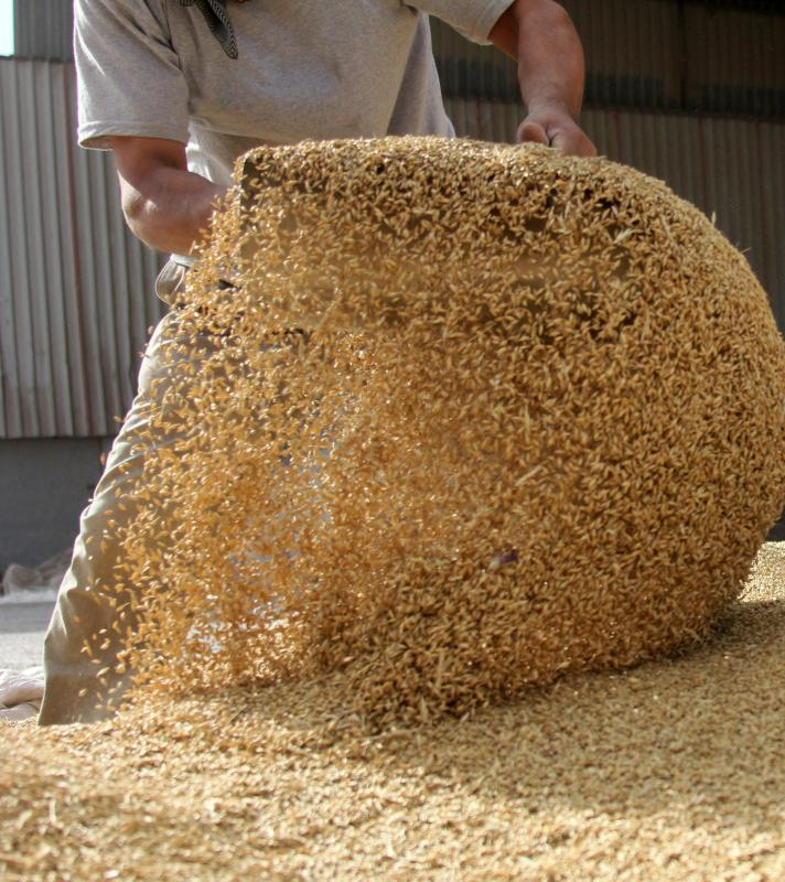 Some cattle feed incorporates soybeans.