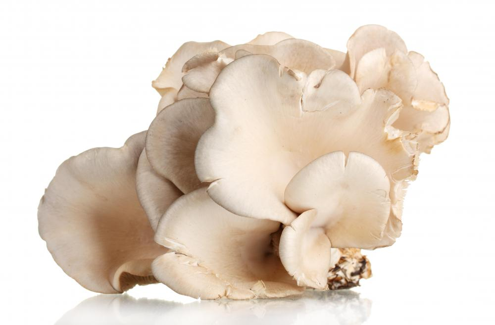 Oyster mushrooms are commonly used in tom yum soup.