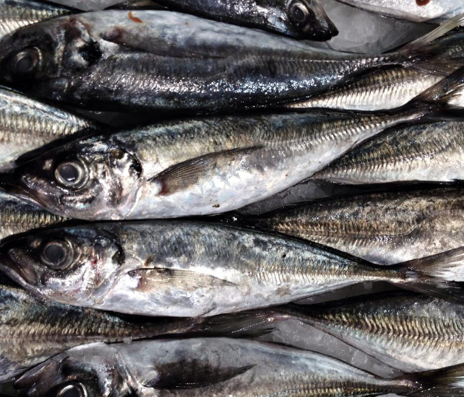 Sardines are often canned in soybean oil.