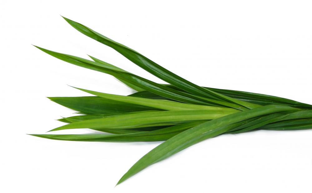 Pandan leaves are from a screwpine.