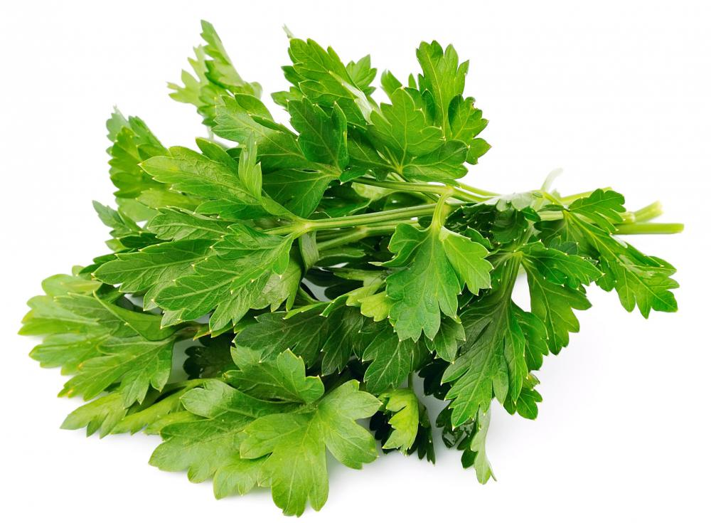 Parsley has many culinary and medicinal uses.