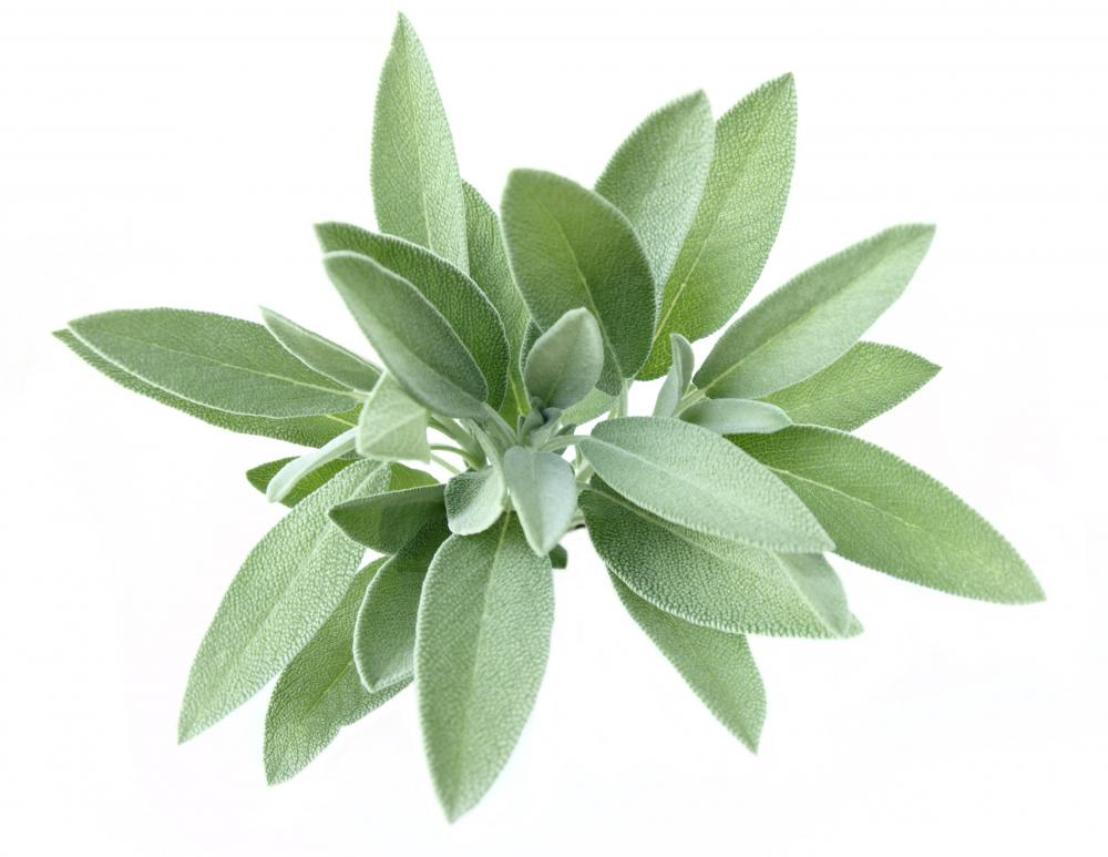 Sage is a spice commonly used for pork cutlets.
