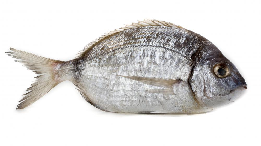 The sea bream's skin color will vary depending on the water type and environment.