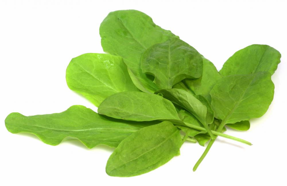 Sorrel leaves, which are used to make green borscht.