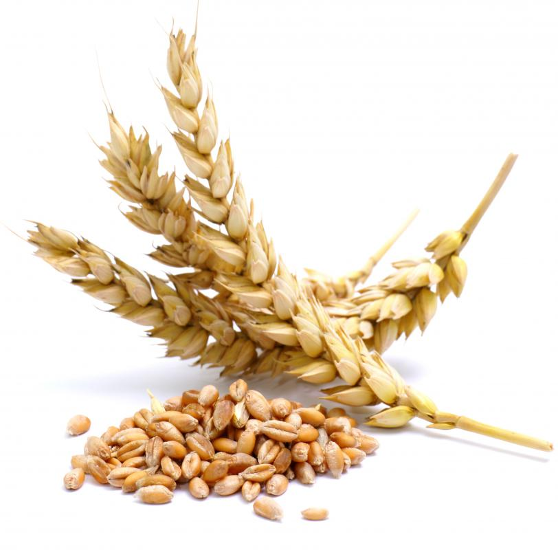 Wheat ears along with a small pile of wheat kernels (also known as wheat berries).