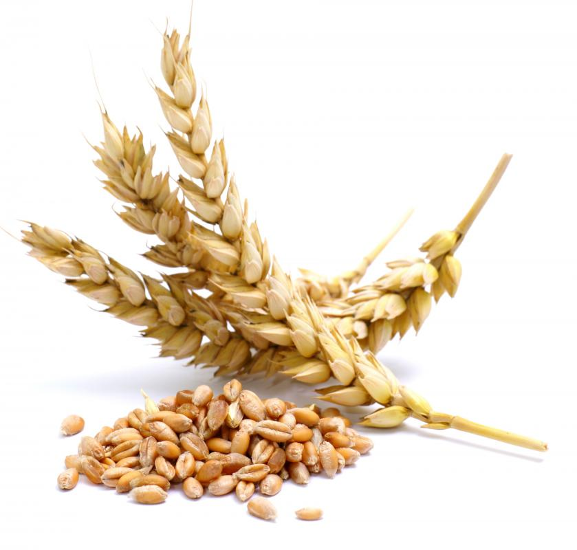 Bran is the outer layer of grains, like wheat.