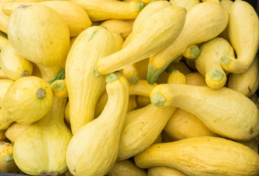 "Squash can be planted alongside corn and beans to complete the ""three sisters"" technique."